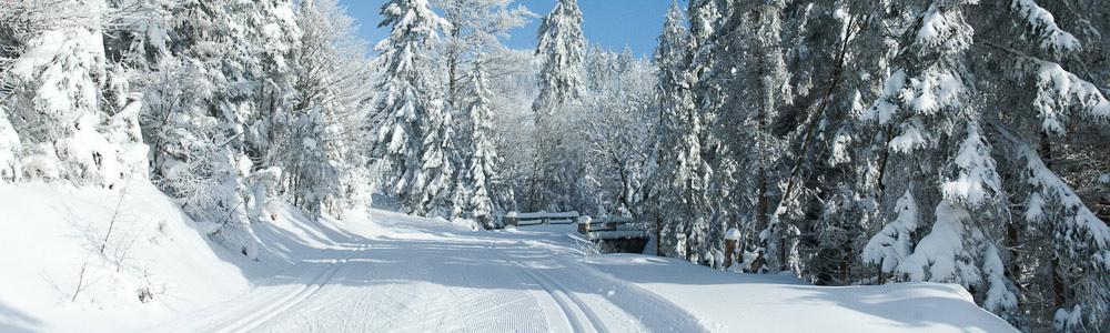 schneebericht.jpg